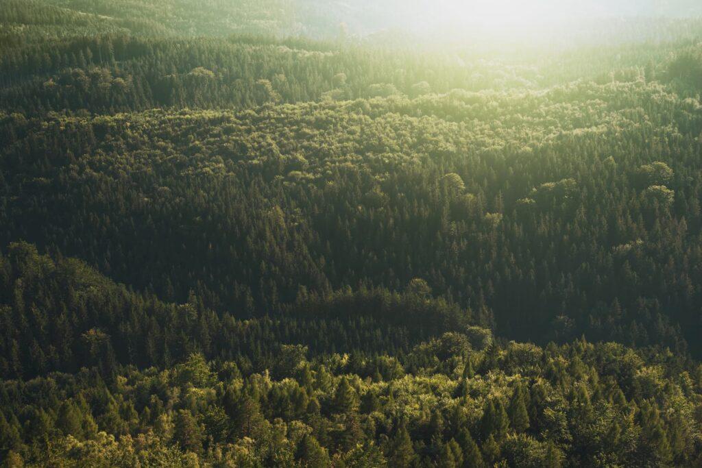 puit_on_keskkonnasobralik_materjal